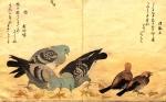 Китагава Утамаро.   Голуби и воробьи